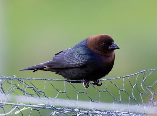 Cley Birds Photo Gallery
